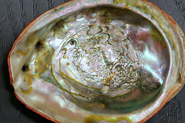 Red Abalone Shell19600303421_7eae835178_z