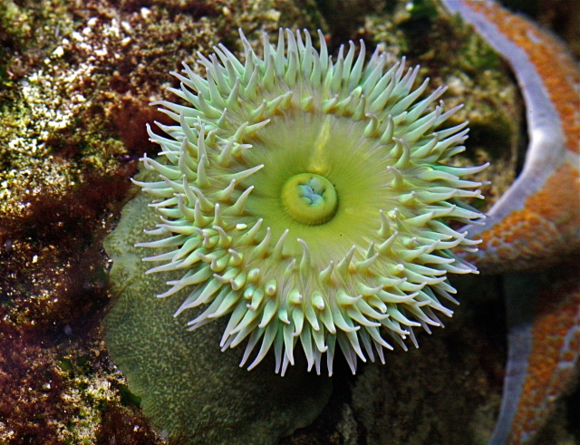 tidepool | Ron's Critter of the Day