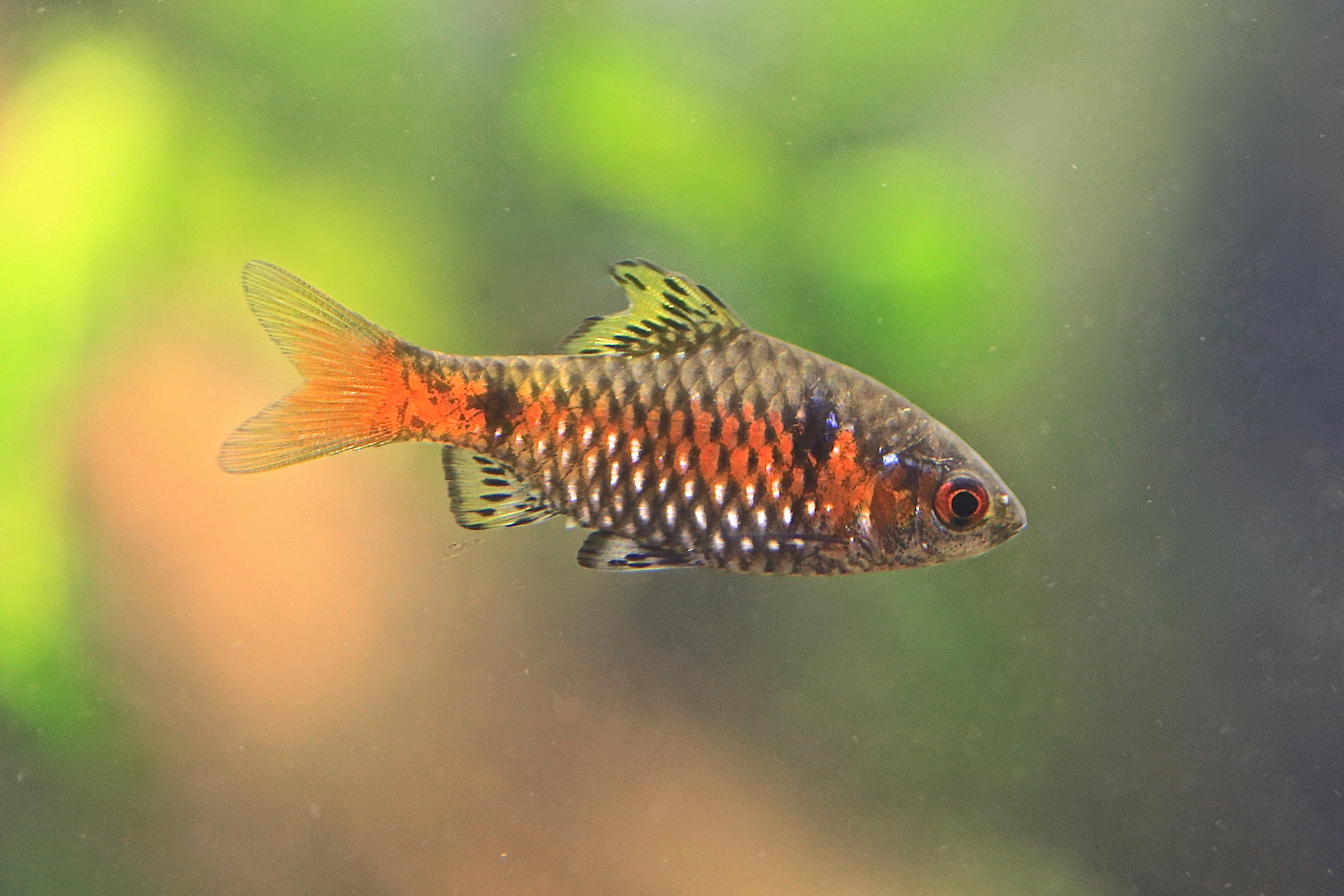 Displaying 19> Images For - Snakeskin Barb...