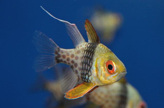 PajamaCardinalfish4676390664_2406090ef7_b