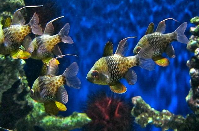 PajamaCardinalfish5251482115_ef180c71f5_b