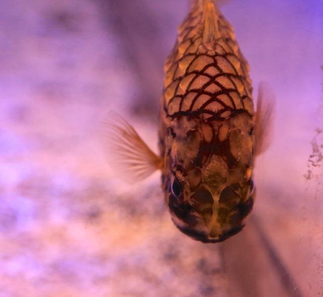 PineconeFish14809348647_ca6e4f130d_k