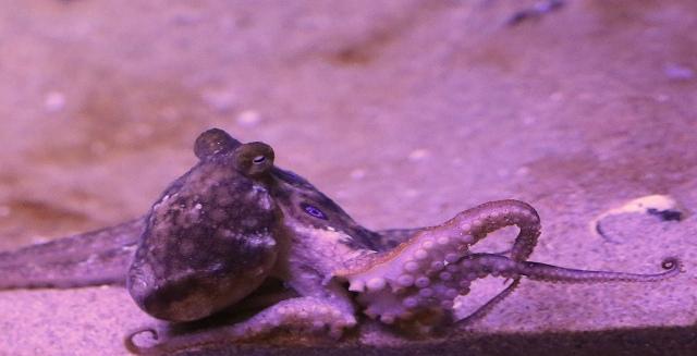 2spot Octopus25853155380_e17555cef7_k