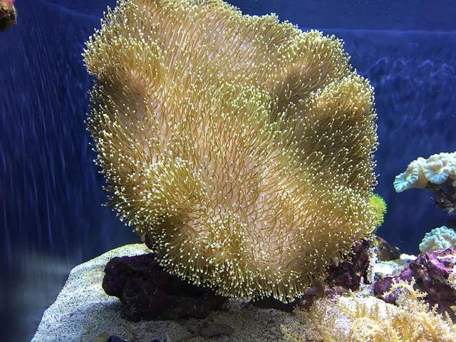 Leather coral25932701823_e4bf21f882_k