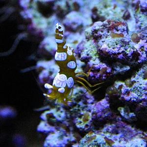 Sexy shrimp4104005971_290c048ff2_o